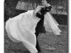 fotografii-nunta-pascani-24-iulie-2010-005